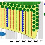 Der Pflanzplan, nach dem das Agroforstsystem gepflanz wurde