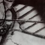 Baumreihen auf dem Feld auf einem alten schwarz-weißen Luftbild